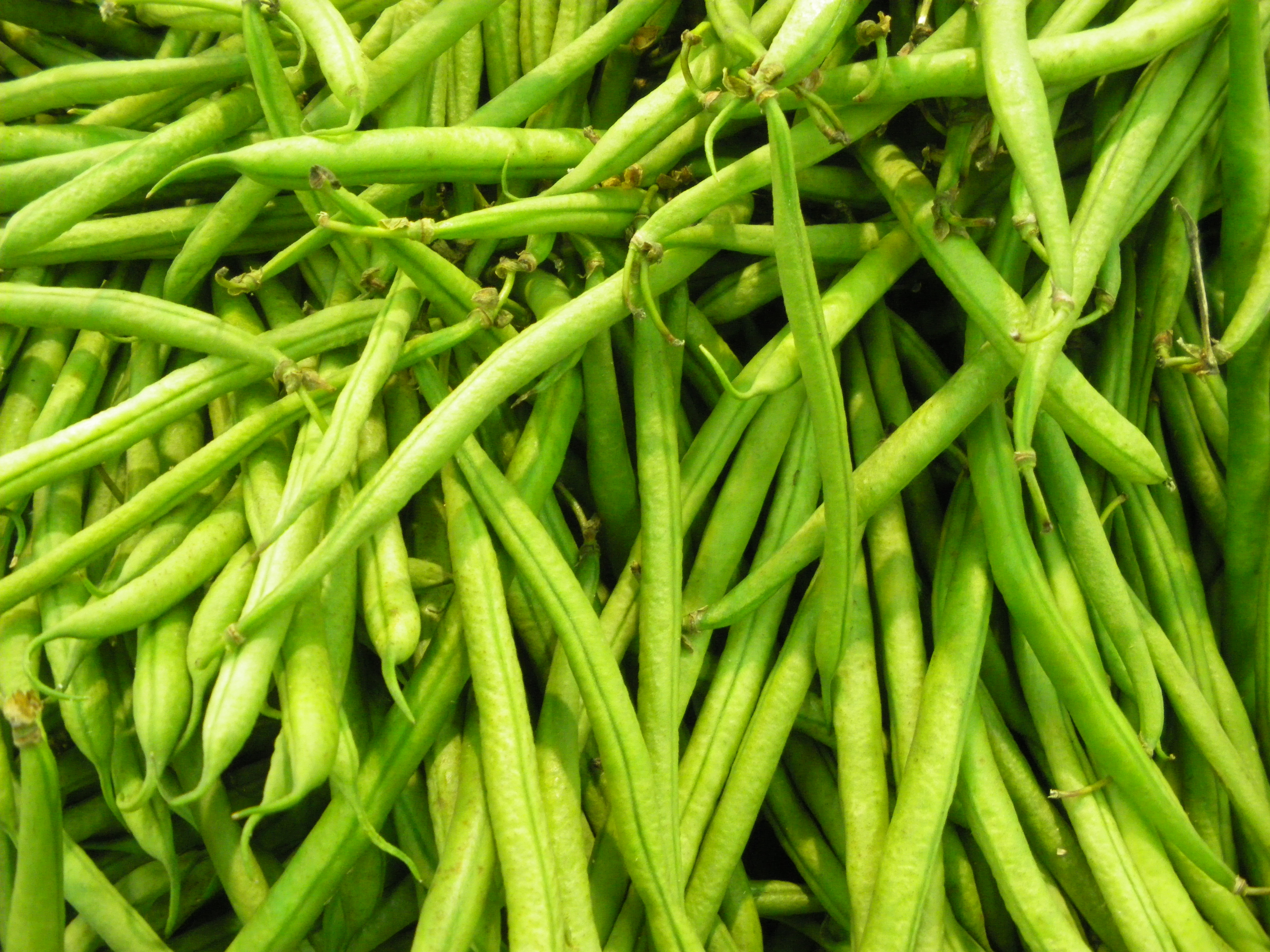 how to keep green beans fresh